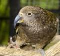 Family outings- wildlife sanctuaries