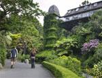 Wellington Botanic Walkway