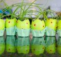 Eggshell caterpillar microgreens garden