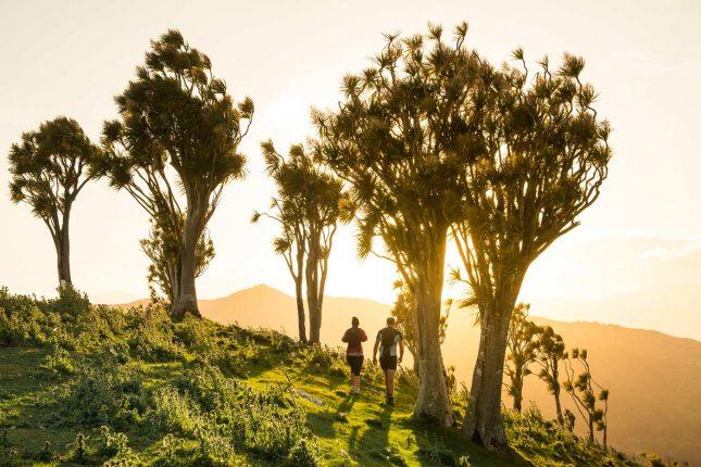Tora Coastal Walk Wairarapa - day 1 - cabbage-trees