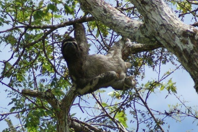 Peru - a great family holiday destination - macchu pichu - Sloth